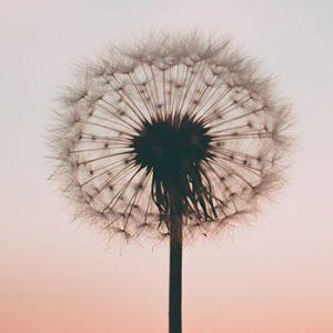Saúde Emocional sob uma nova perspectiva